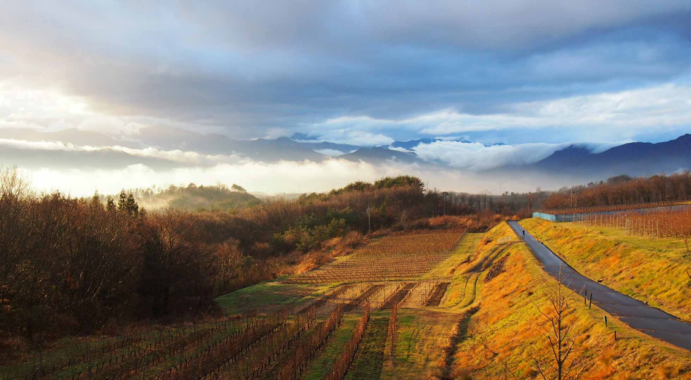 Nagano Villadest Winery Vineyard