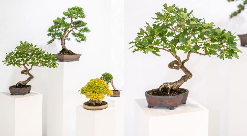 An introduction to bonsai | Japan House London